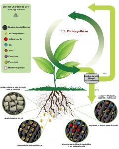 Micro Biochar jardin boite 120ml