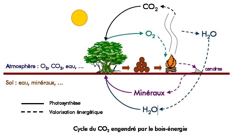 Cycle du bois energie